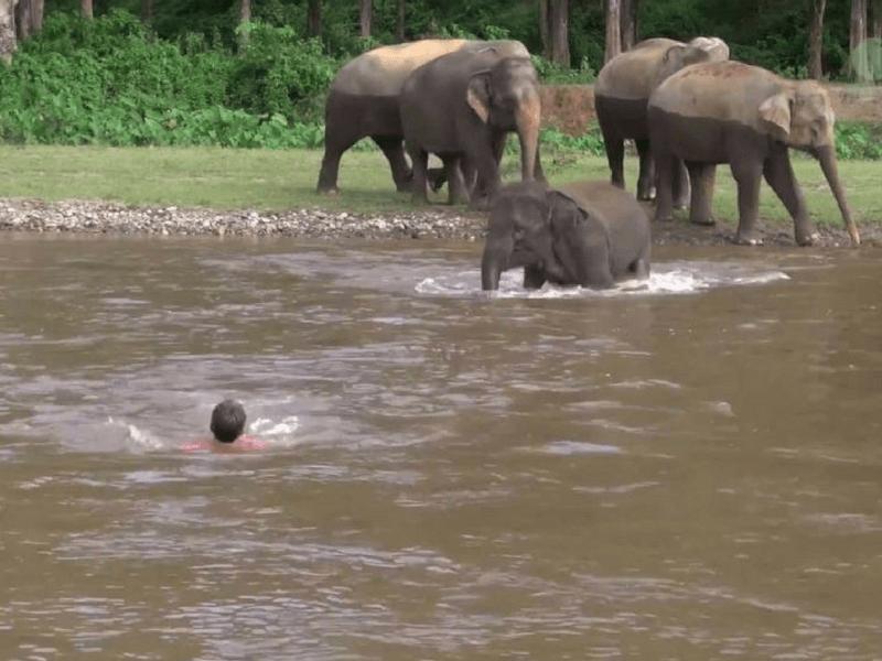 mustget-elephant