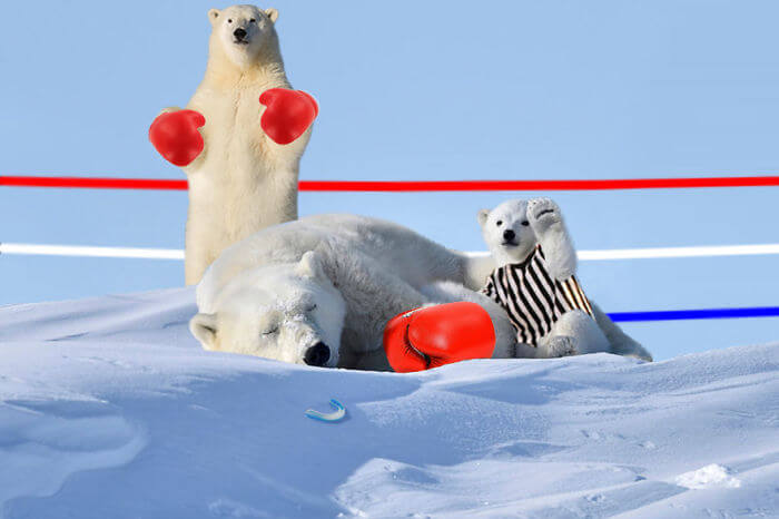 polar-mustget