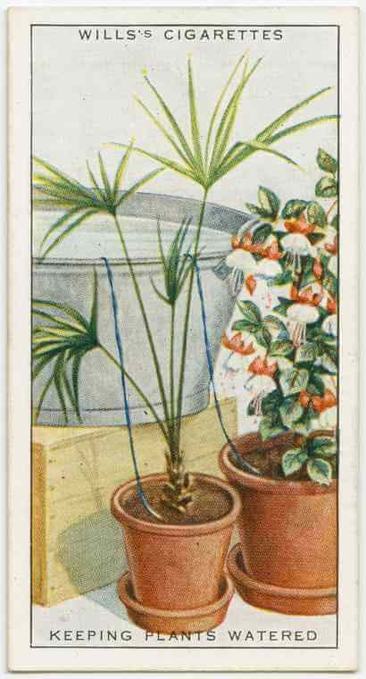mustget-plants-watering