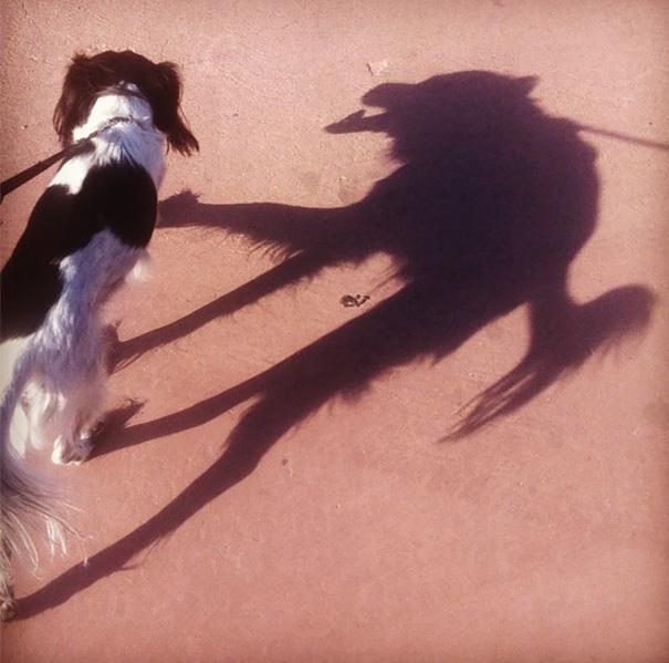собака тень