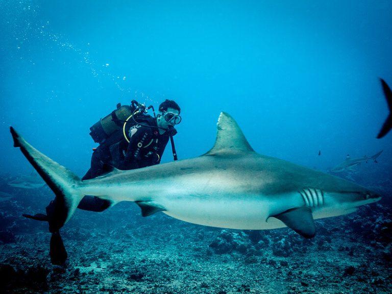 акула8