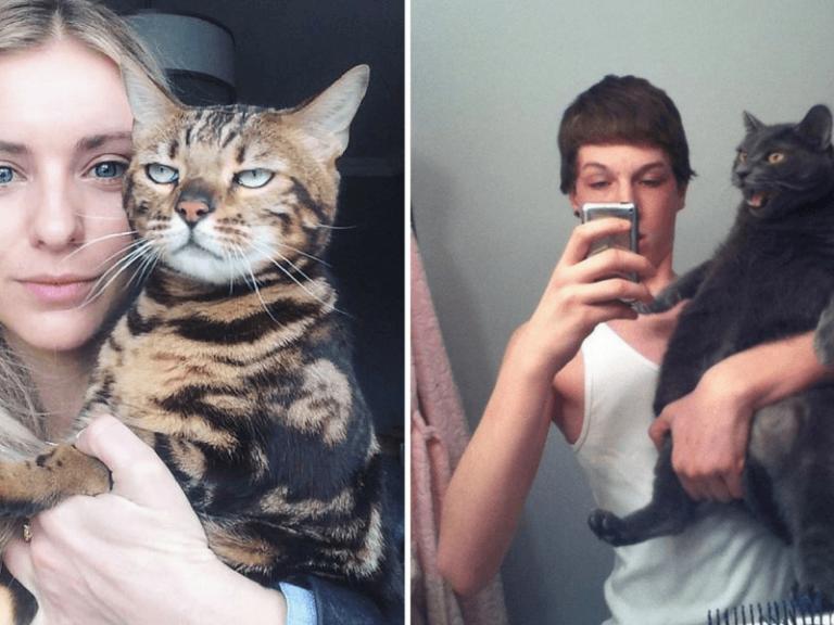 фото с котиками