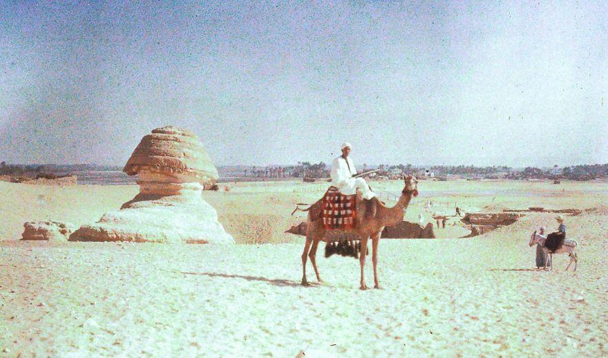 Сфинкс и верблюд