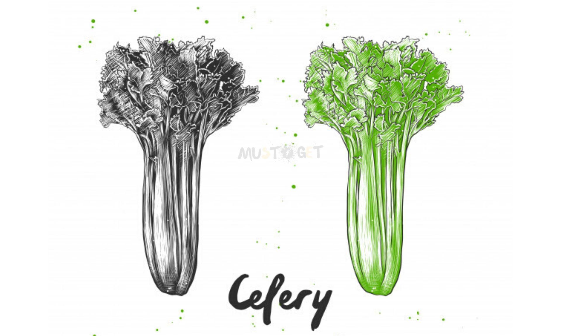 Как вырастить сельдерей из стебля. Пошаговая инструкция, фото.
